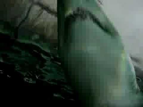 tubarão - aquario sydney