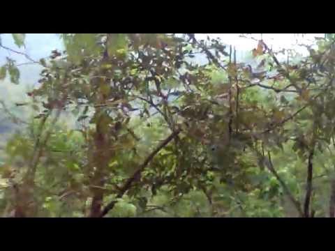 Khammam forest.mp4