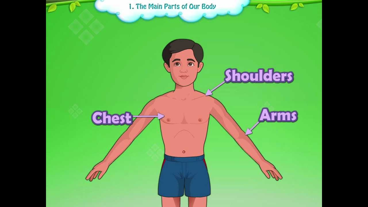 Learn Grade 1 - Evs - The Parts Of Our Body