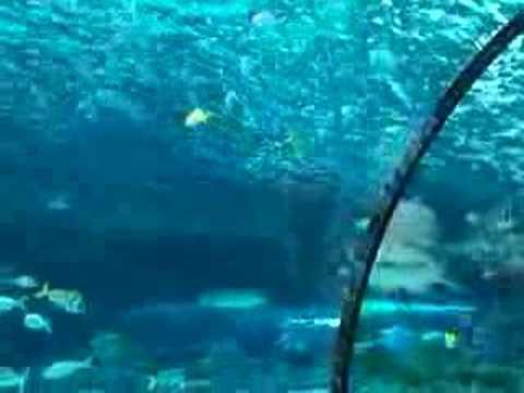 Ripley 39 S Aquarium Coupons