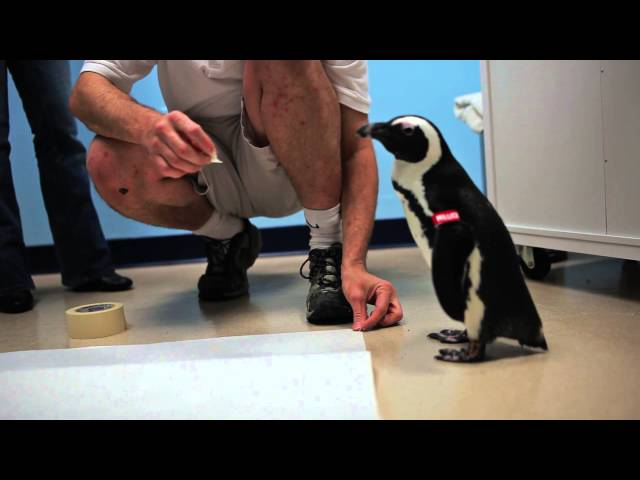 Backstage Penguin Pass: Audubon Aquarium of the Americas