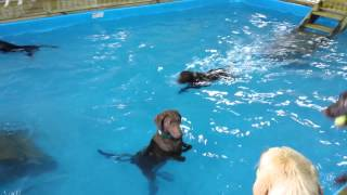 The Non Swimming Dog