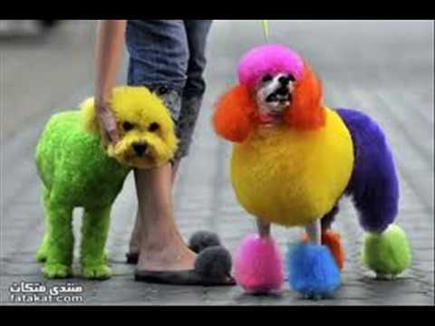 Nice  dogs in funny situations -Egyptian Music
