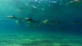 サメの大群1