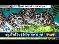 Hundreds of rare turtles recovered by Mumbai Police