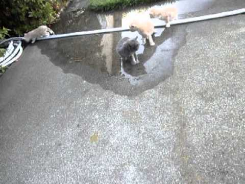 five kittens for youtube 053113 005