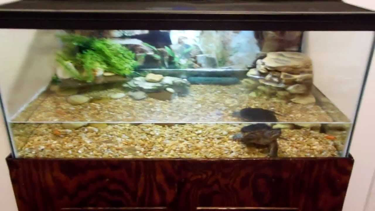 Turtle tank setup large turtle tanks for sale 2017 for Setting up a fish tank
