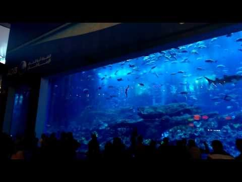 Grand Aquarium at the Dubai Mall