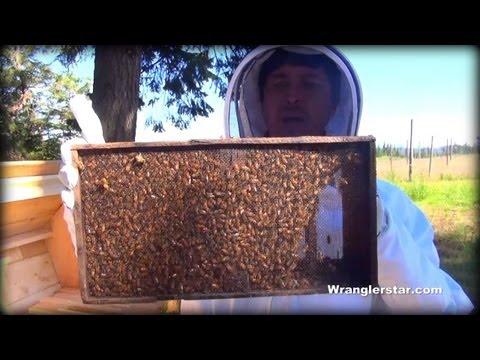 Honey Bees Back Yard Beekeeping Made Simple