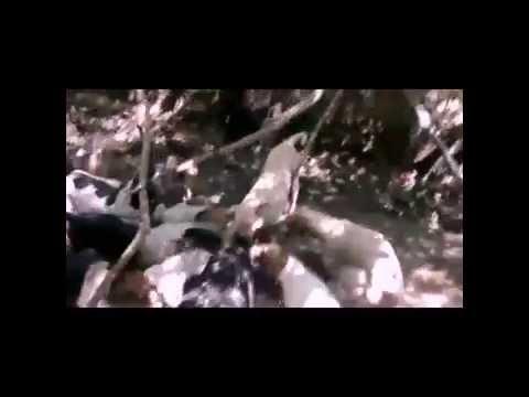 Canil do Caçador - Caçada de Javali com Dogo