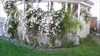 Home and Yard Design Ideas - YouTube