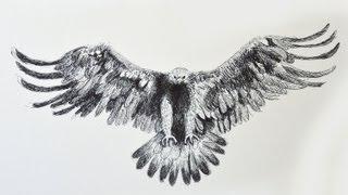 Como dibujar un águila