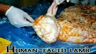 Sheep Gives Birth To Human-Faced Lamb
