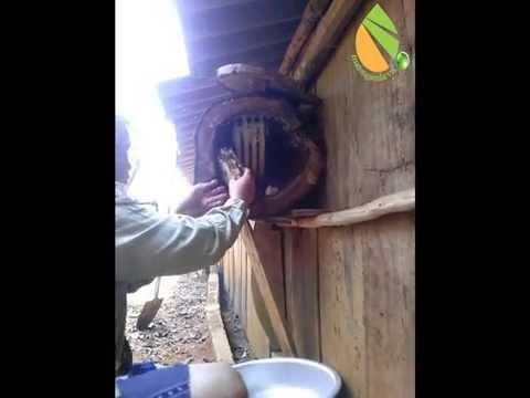 Mật ong nguyên chất Sơn La được lấy như thế nào