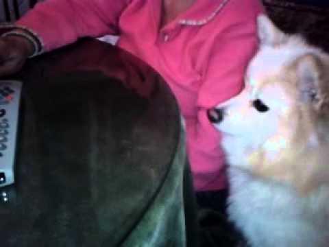 Gatito y perrito llorando