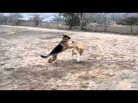 Enduro i Blondyna - Walki psów odc. 1156