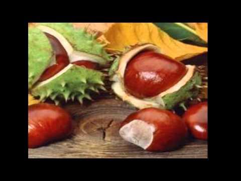 Tratamento Natural: castanha da india