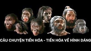 Quá trình tiến hóa về hình dáng của sinh vật | Phim khoa học khám phá (thuyết minh)