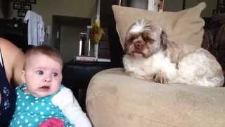 Baby argues with Dog