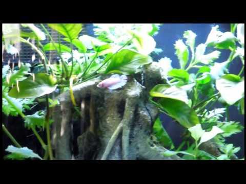 Fish Aquarium Decorations Youtube