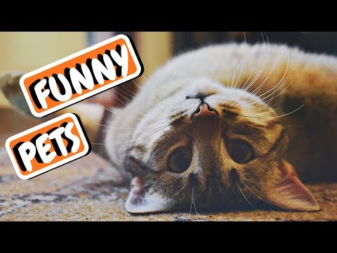 Funny Animal Compilation | Dog Fail | Funniest Animals 2019