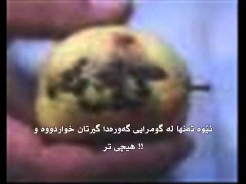 قورئان كوردى ته فسيرى سورة الملك  quran kurdish quran 2010 .wmv