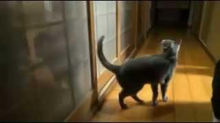 เปิดประตูให้แมวหน่อย