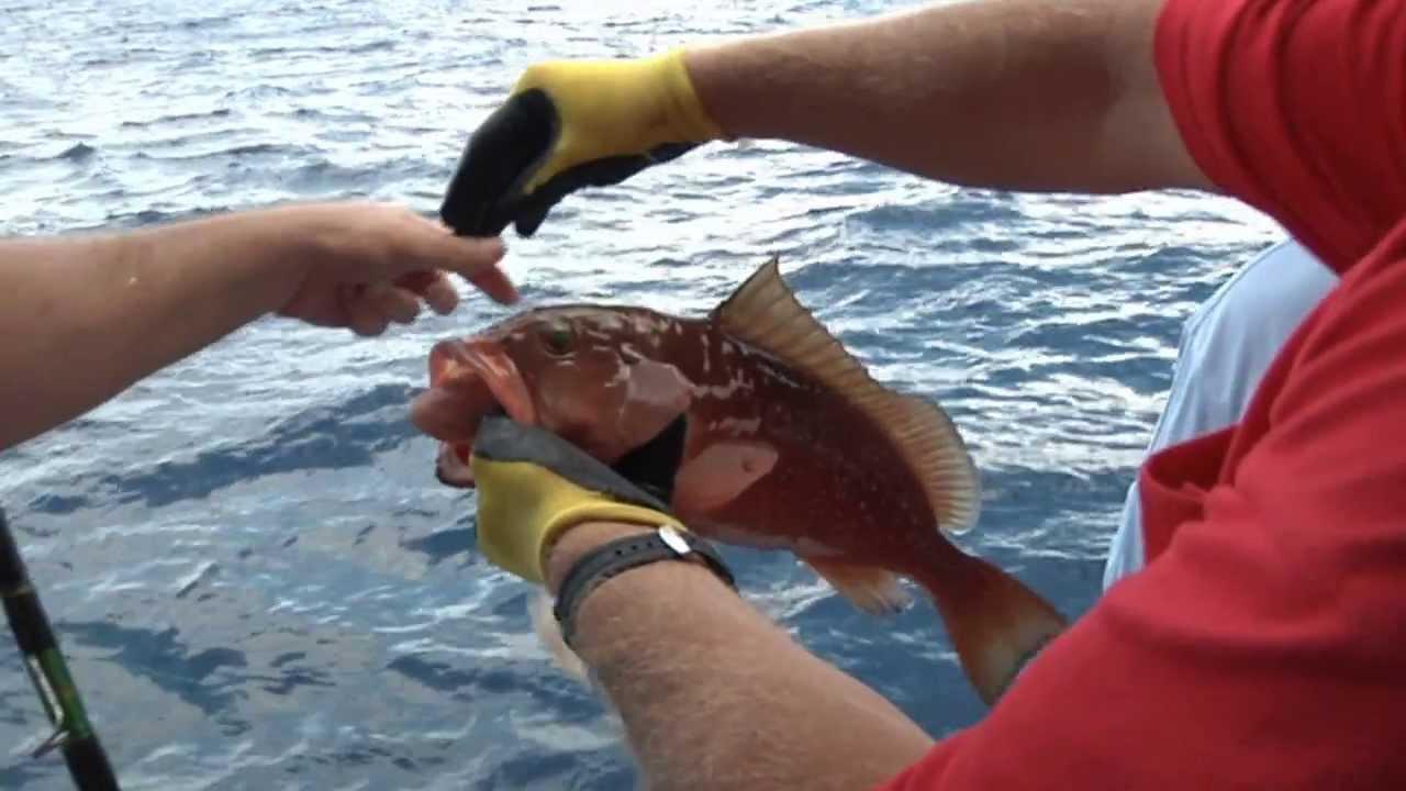 Reel animals fishing deep sea fishing party cruise june for Johns pass fishing