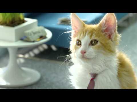 Bouygues Telecom présente les Chatons Telecom, Pour vous qui aimez les vidéos avec des petits chatons, Bouygues Telecom vous offre 1 minute de petits chatons. Pour infos : http://www.bouyguestelecom.fr