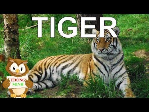 Bé học tiếng anh qua hình ảnh con vật | tiếng kêu của các loài động vật | dạy trẻ thông minh sớm 1