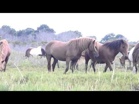 Horses Mating Up Close - [NEW] Big Horse Mating Very Funny HD Part 2