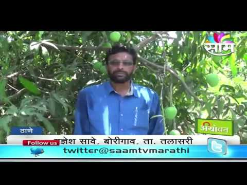 Yadnesh Save's mango farming success story