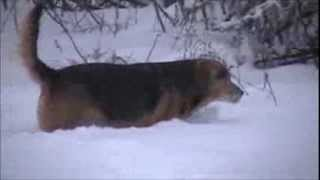 [4 Days of Snow 2013 Rochester Ny area upstate NY] Video