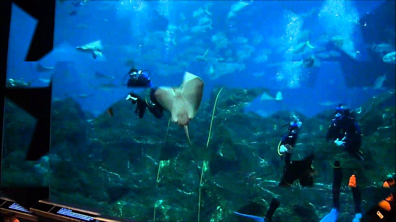 Camden Adventure Aquarium Nj Divers And Sharks Jan 22