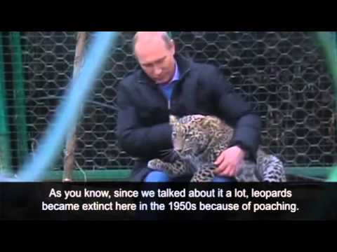 Sochi Winter Olympics: Vladimir Putin gets cosy with leopard