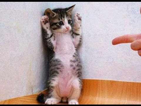 Funny Cats Video - Funny Cat Videos Ever- Funny Videos - Funny Animals Funny Animal Videos