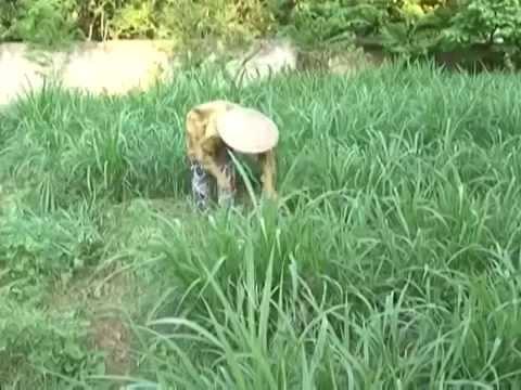 Mô Hình Nuôi Thỏ Thương Phẩm Hiệu Quả Cao Tại Bắc Giang