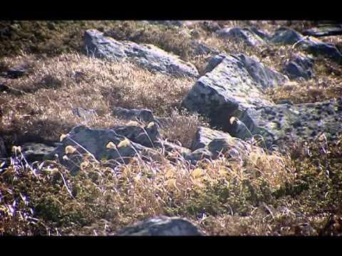 Башкирское родословие: Тазлар