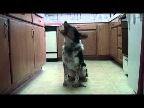 Chú Chó Phi Thân Ảo Diệu