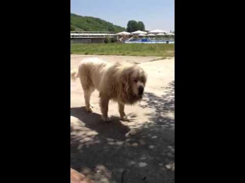 Qeni I ujvares Ferizaj
