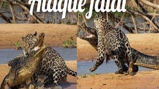 Planeta Animal: Onça Ataca Crocodilo / Ounce Attacks