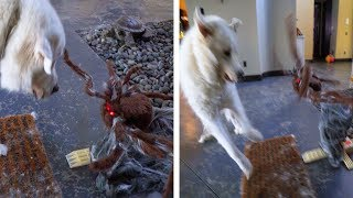 DOGS REACT TO SPOOKY HALLOWEEN DECORATIONS - Super Cooper Sunday #118