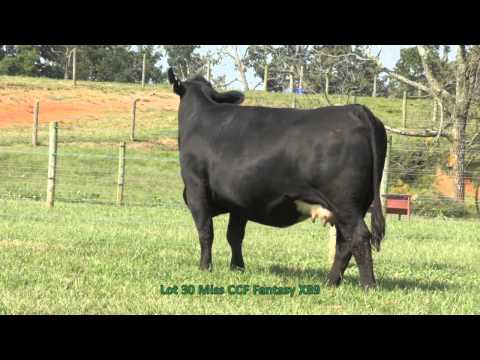 Lot 30 KenCo Family Matters 2013 X89