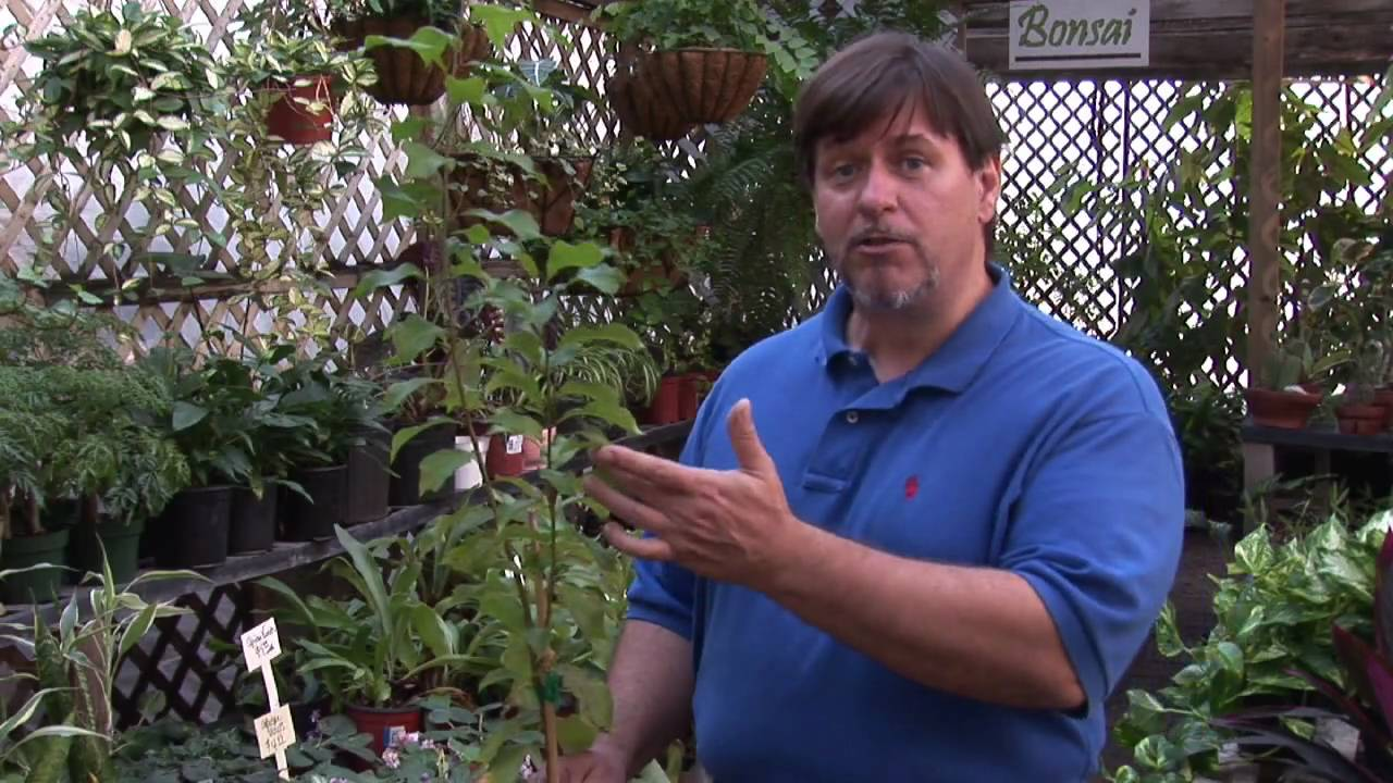 how to grow plum tree from seed