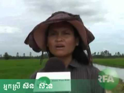 Citizens in Svay Reang Complained about Their Rice Fields Lost
