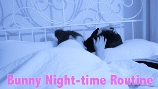 Bunny Night-time Routine
