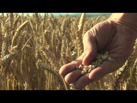 You Are What You Eat: Food Matters Trailer