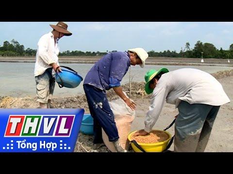 THVL   Chuyện hôm nay: Vĩnh Long với vụ lúa hè thu hạn mặn (21/4/2016)