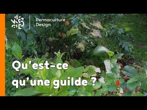 La minute permaculture #4 : QU'EST-CE QU'UNE GUILDE?