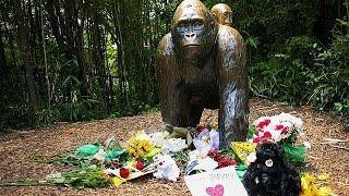 استياء كبير عقب قتل غوريلا في حديقة للحيوانات بسينسيناتي |